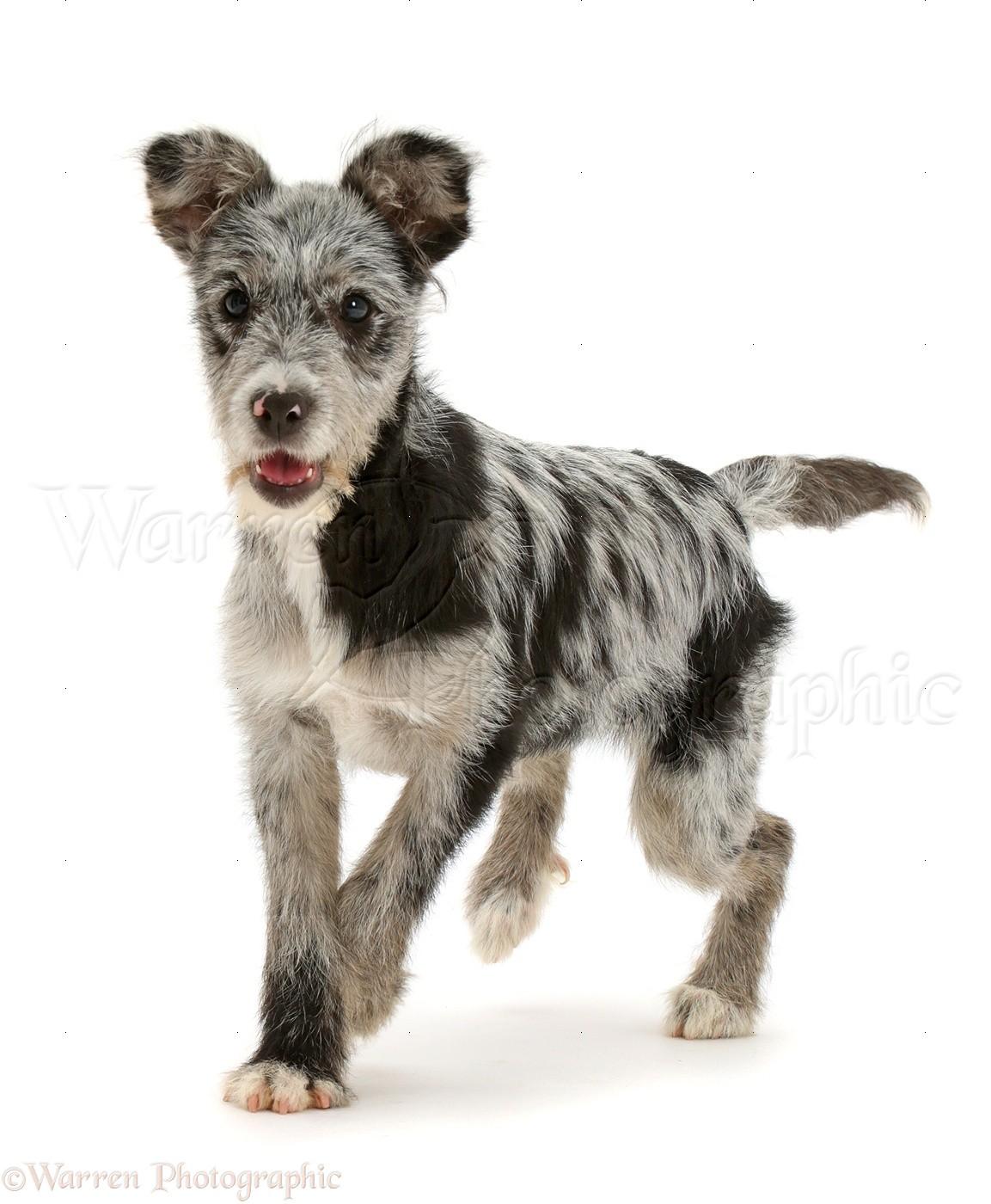 Puppy Mutt Dog