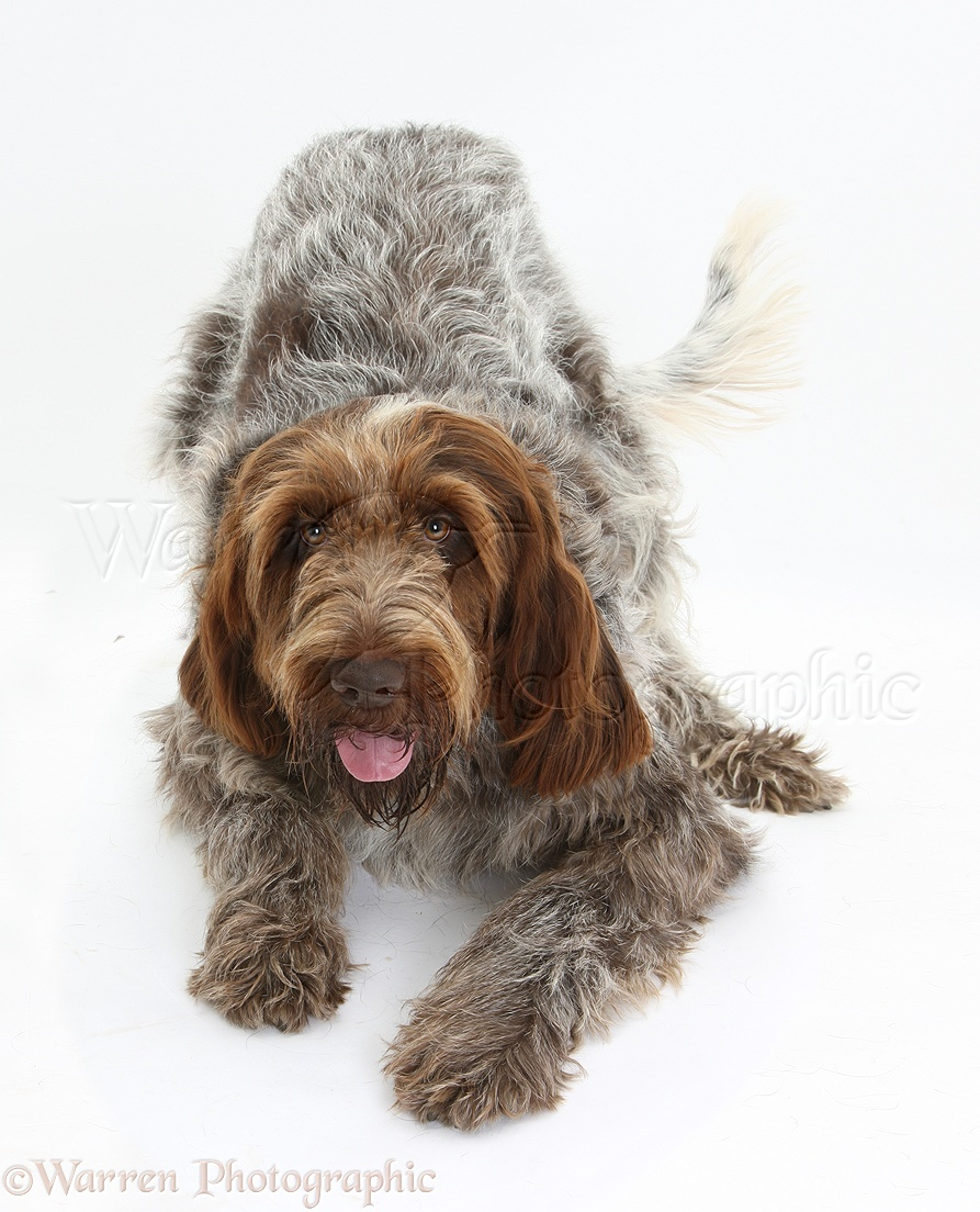 Pictures Of Dog Breeds Uk