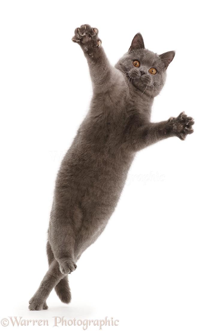 Falling Cat Video