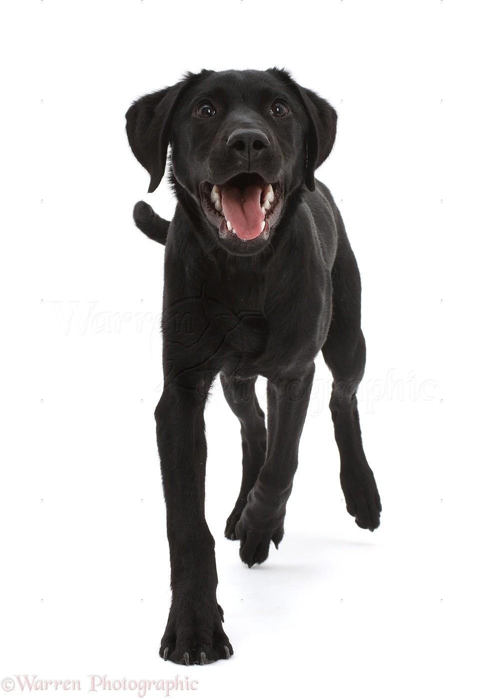 Dog Photo Black Background