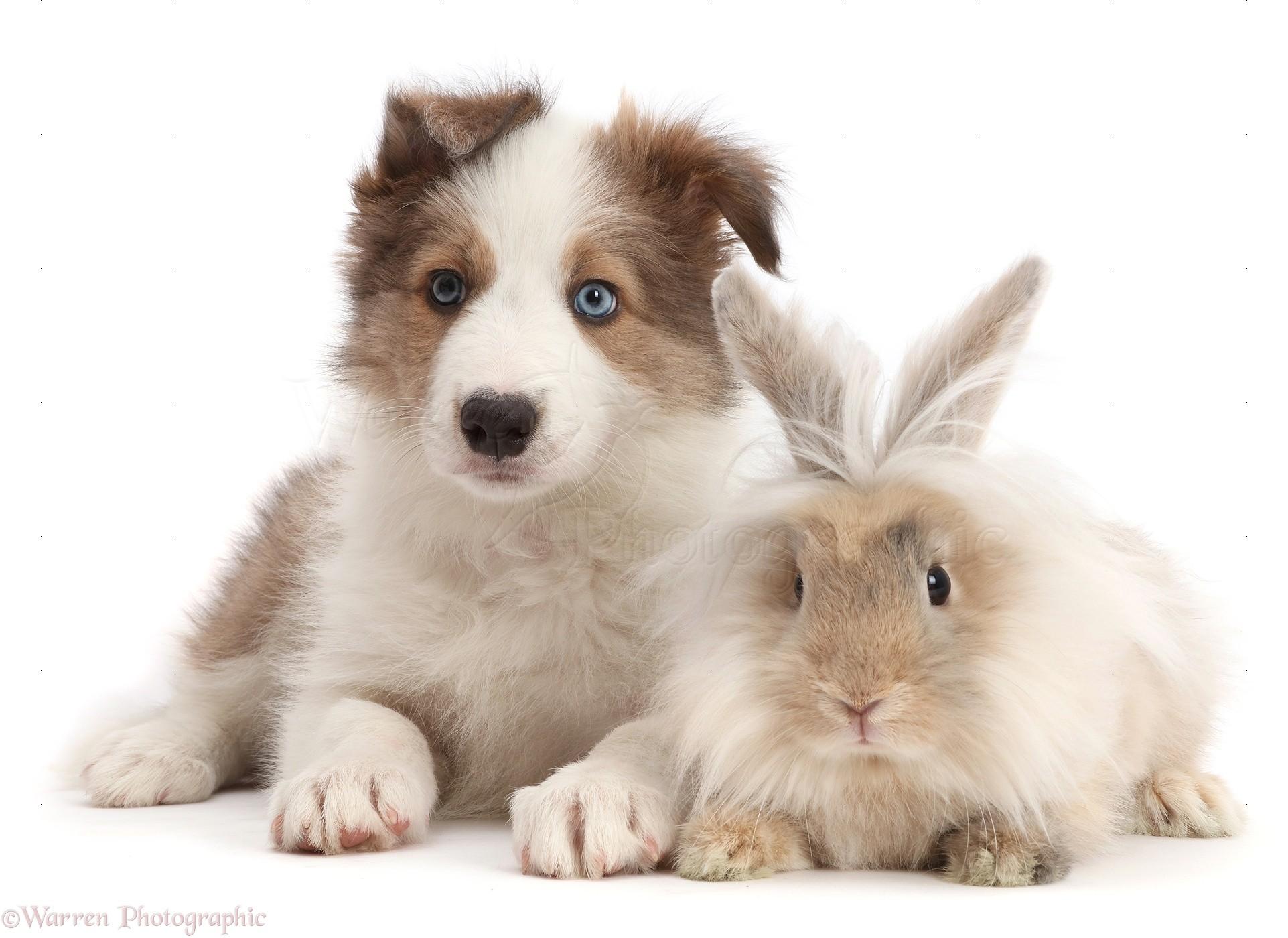 Fluffy Pet Dogs