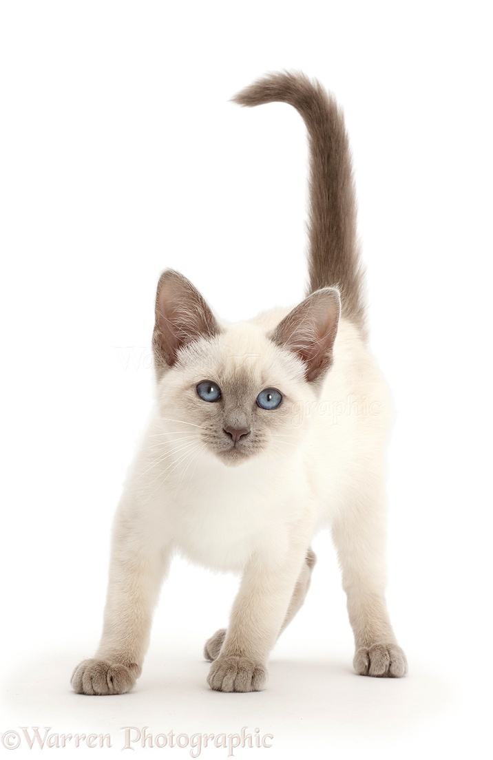 New Cat Videos