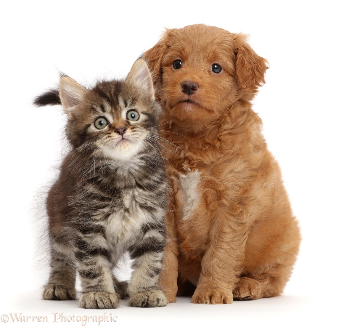 Toy Cats And Dogs