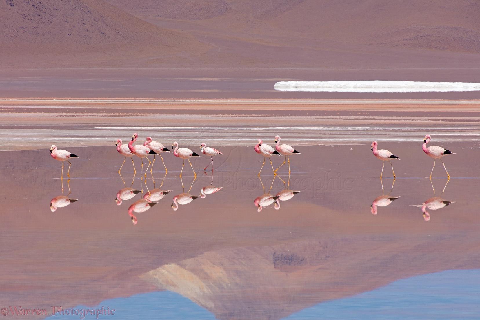Image result for Laguna Colorada, Bolivia