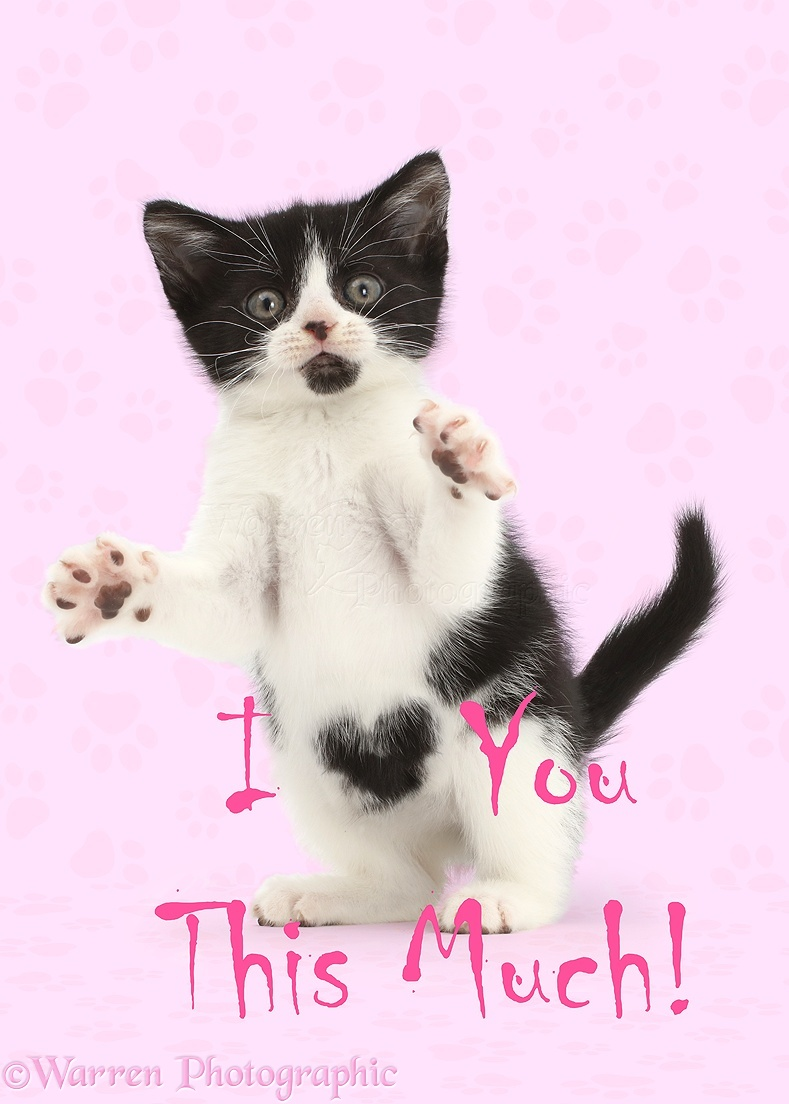 I Love You This Much Kitty | www.pixshark.com - Images ...