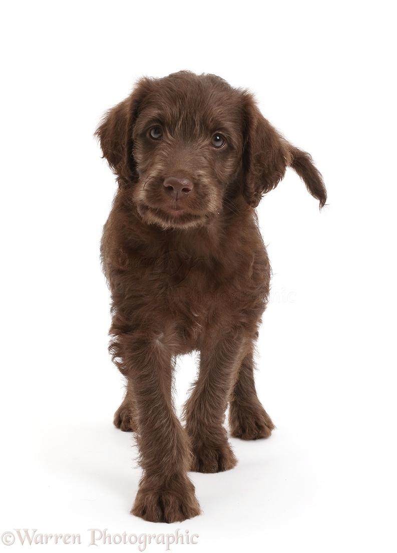 Cross Dog Breeds Uk