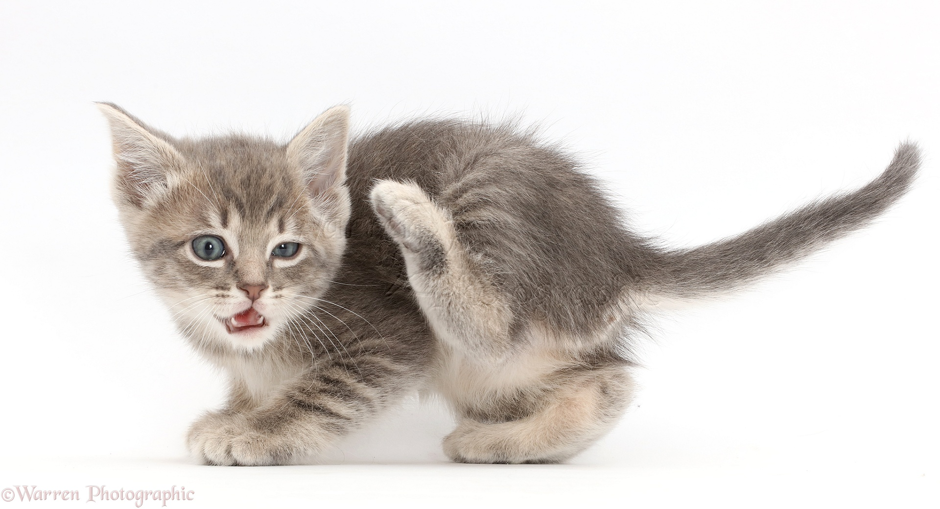 how to stop a kitten from scratching
