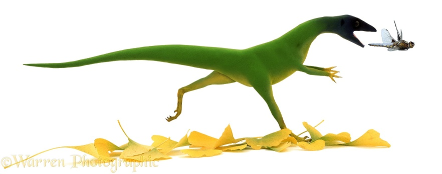 Compsognathus chasing a dragonfly, white background