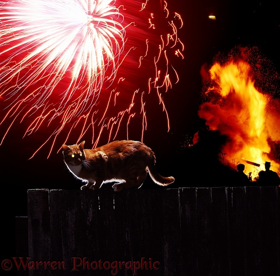A cat frightened by a firework display
