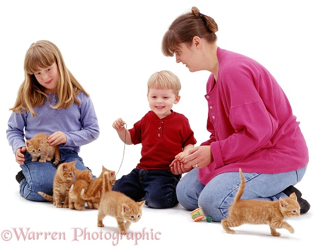 Ginger kittens, introduced to children, Joshua (2) and Sade (10), white background