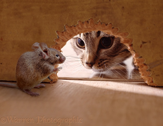 Cat looking through hole at mouse