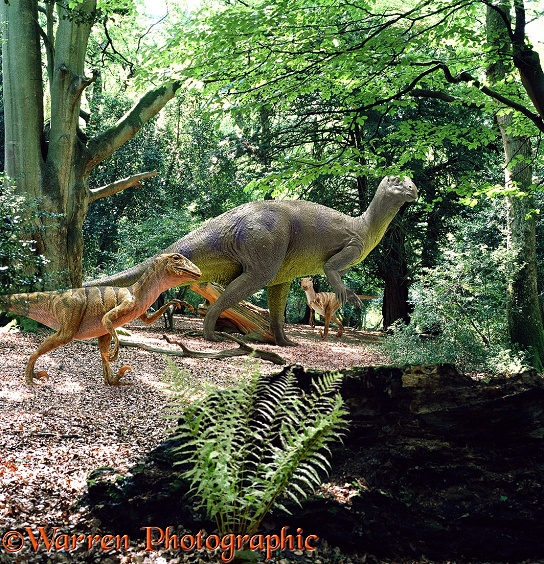 Iguanodon, a large plant-eating dinosaur, being harassed by two predatory Deinonicus