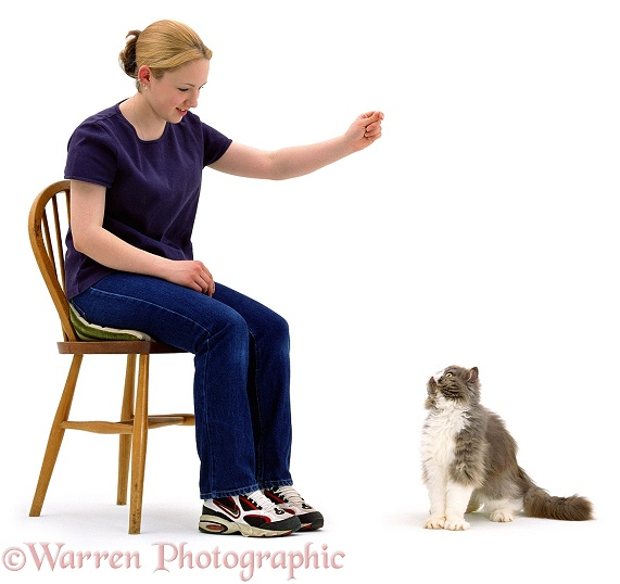Kathryn teaching 3-year-old Persian cat, Cobweb, to 'sit', white background
