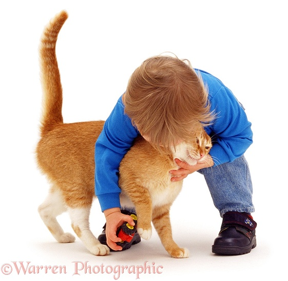 Luke (18 months old), playing with Red Burmese female cat, Sabrina, white background