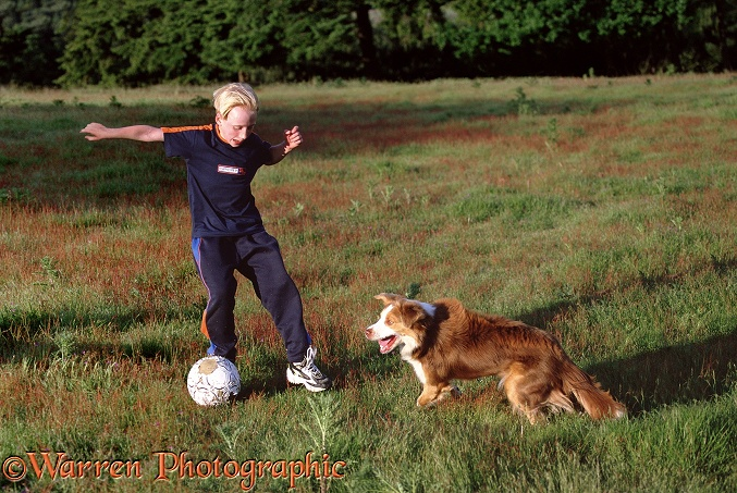 Boy playing football with Border Collie, Brak