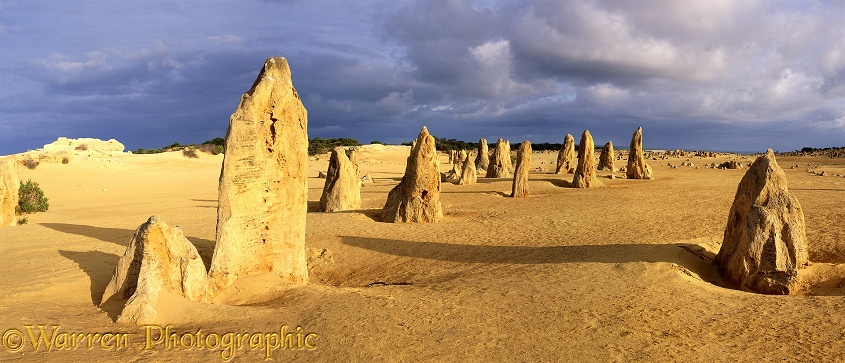Pinnacles panorama.  Western Australia