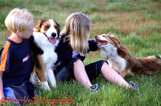Children with Border Collies
