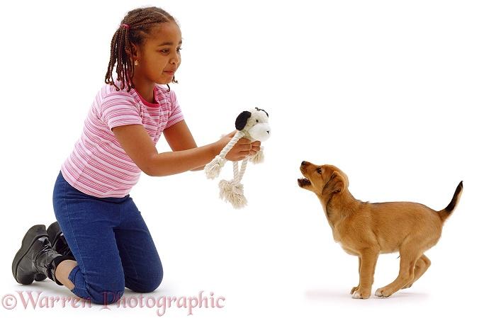 7 year old Latasha with Lakeland Terrier x Border Collie puppy, Joker, 8 weeks old, white background