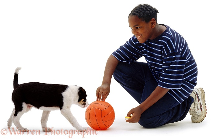 Boy, Laurrie, 11 years old, with border Collie puppy, Oliver, 8 weeks old, white background