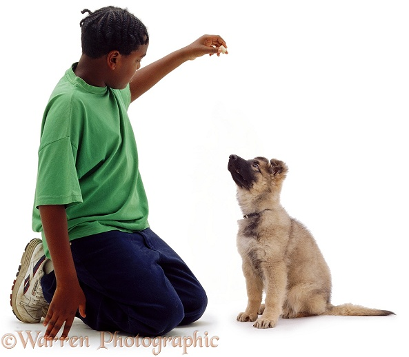 Boy, Laurrie, 11 years old, with German Shepherd Dog pup, Zena, 12 weeks old, white background