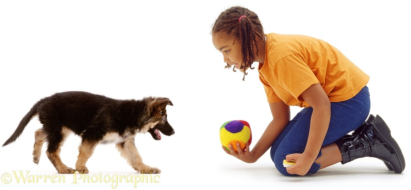 7 year old Latasha with German Shepherd Dog puppy, 8 weeks old, white background