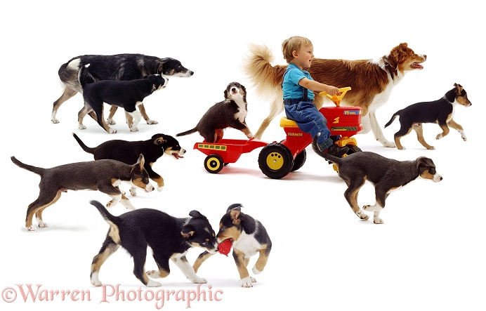 Luke on tractor with Border Collie Brak and his family, white background