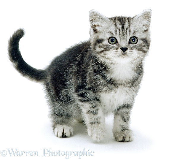 Cat Names For Brown Tabby Cats