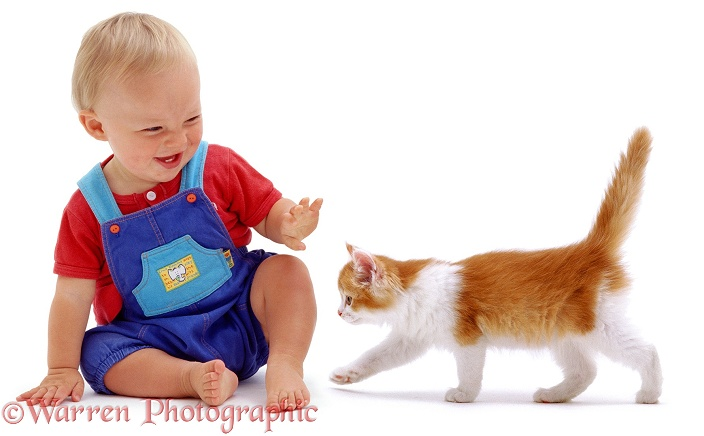 Luke, 11 months old, with ginger-and-white kitten, white background