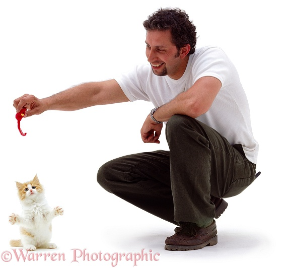Man playing with kitten, white background