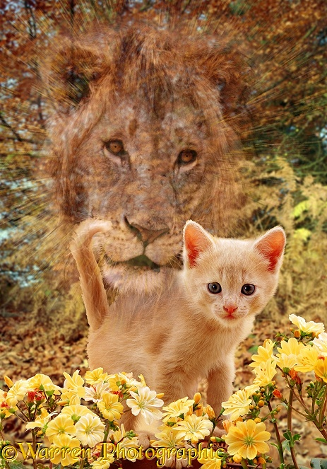 The spirit of a lion protects a young kitten at play among some flowers