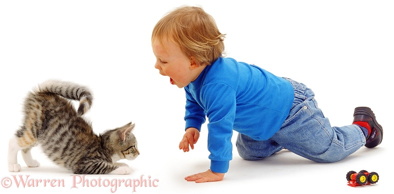 Luke, 18 months old, plays with squirrel-tail kitten who is pouncing, in a play-bow, white background