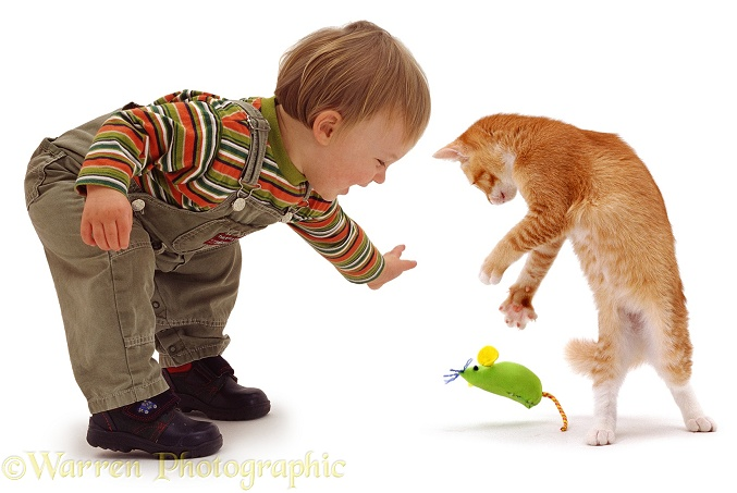 18-month-old Luke, with red cat Sabrina, pouncing a green catnip mouse, white background