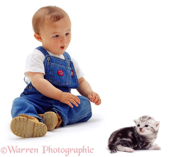 Oriental toddler, James, 15 months old, with silver tabby kitten Butterfly, 3 weeks old, white background