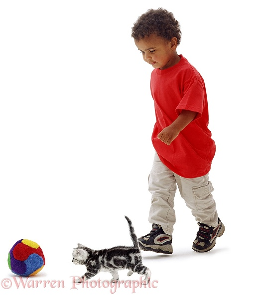 Afro-Caribbean boy, Jumaane, 3 years old, with silver tabby kitten Butterfly, 4 weeks old, white background