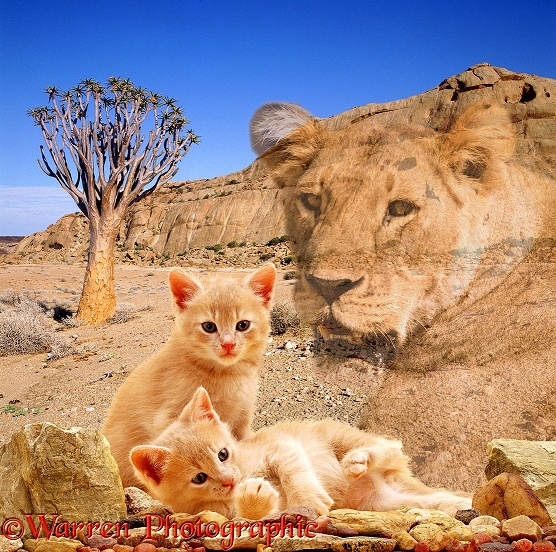 The spirit of a lioness protects young kittens in the Namib Desert