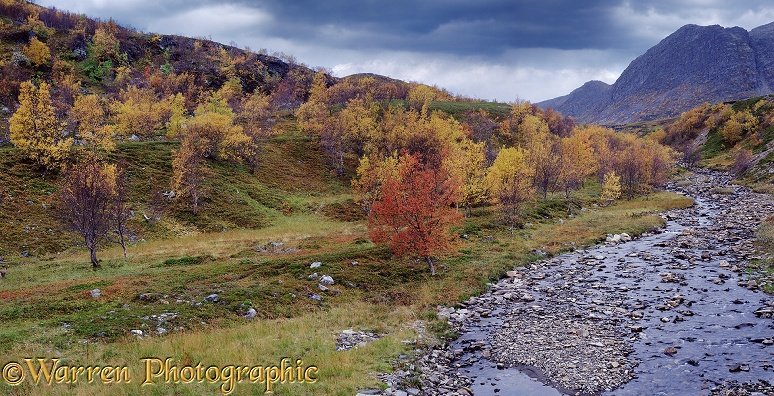 Autumnal scenery.  Norway