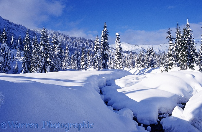 Snow scene at Hemlock Valley.  British Columbia, Canada