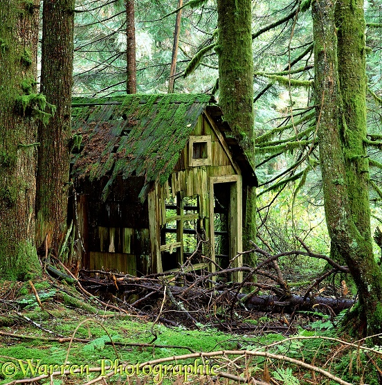 Rotting wooden shed (Nature reclaims it's own).  Washington State, USA