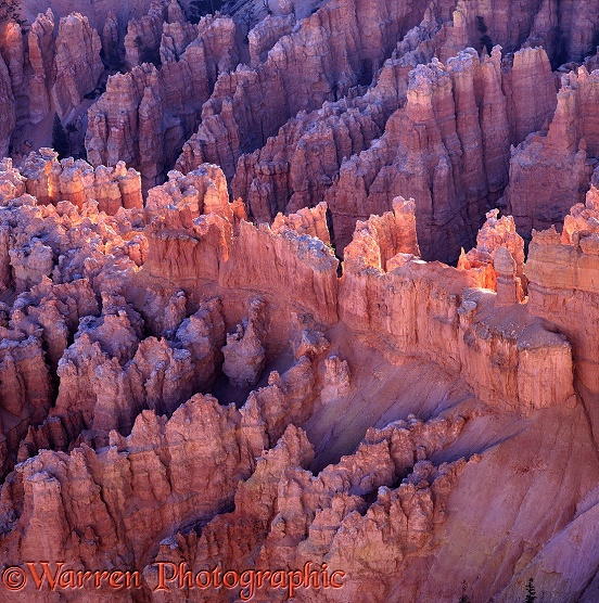 Pinnacles of soft sandstone, known as hoodoos.  Bryce Canyon, USA