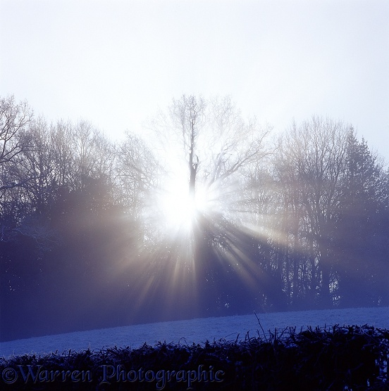 Mist and sunbeams on a frosty morning.  Surrey, England