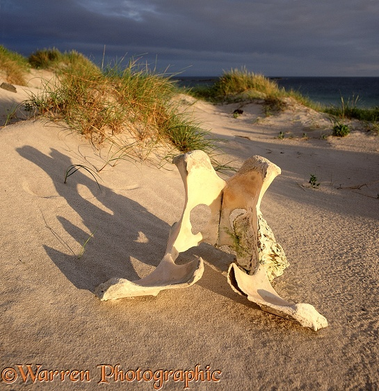 Bone and sand dunes.  North Uist, Scotland