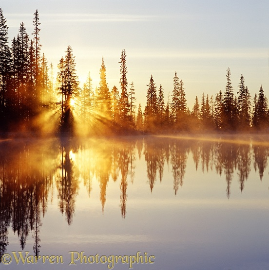 Lake at sunrise with mist, sunbeams and reflected spruces.  Finland