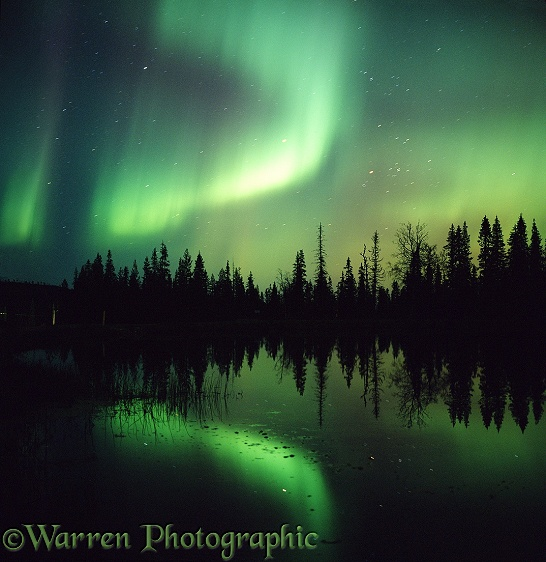 Aurora Borealis with reflection in lake and silhouette conifer trees.  Finland