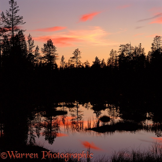 Trees reflected in pond at sunset.  Finland