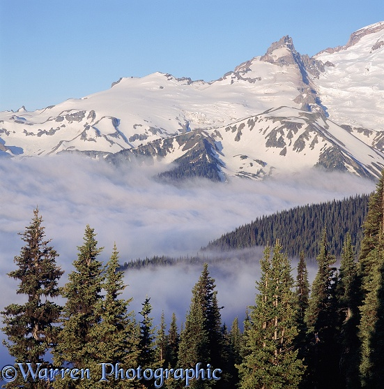 Low clouds at Mt. Rainier.  Washington State, USA