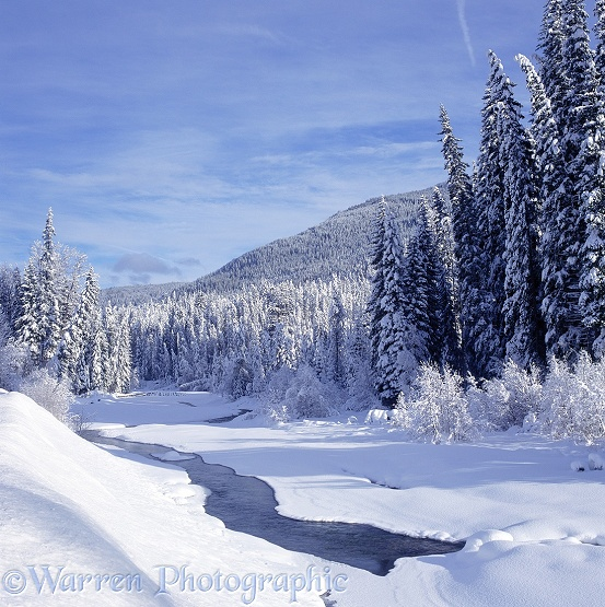 Fresh snow in Manning Park.  British Columbia, Canada