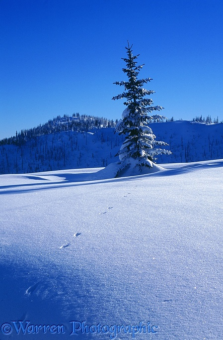 Snow at Manning Park ski area.  British Columbia, Canada