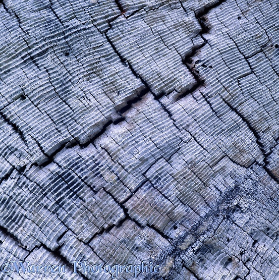 Driftwood patterns.  Washington State, USA