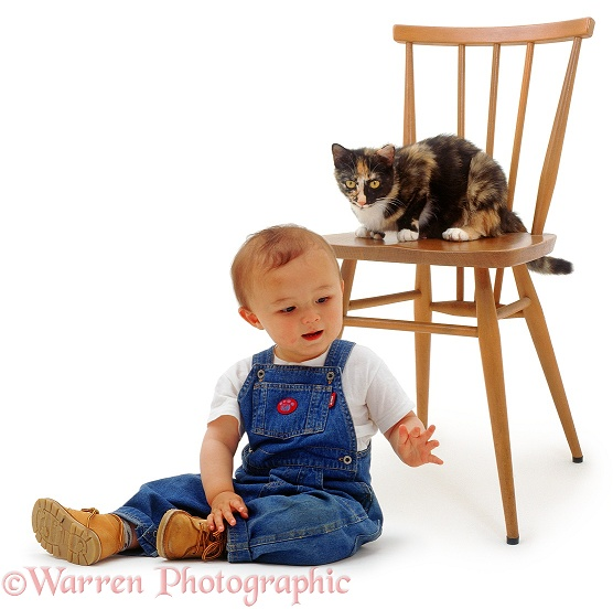 Oriental toddler, James, 15 months old, causes the house cat to take refuge on a chair, white background