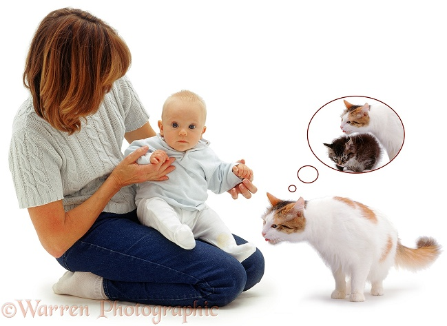 Carolyn with baby Sam and mother cat, Alexandria, who wishes to join in loving the baby, white background